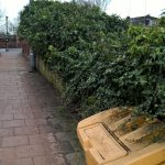 Urmston Station Bushes