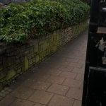 Flixton Road bushes pruned